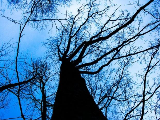 tree-200221_640